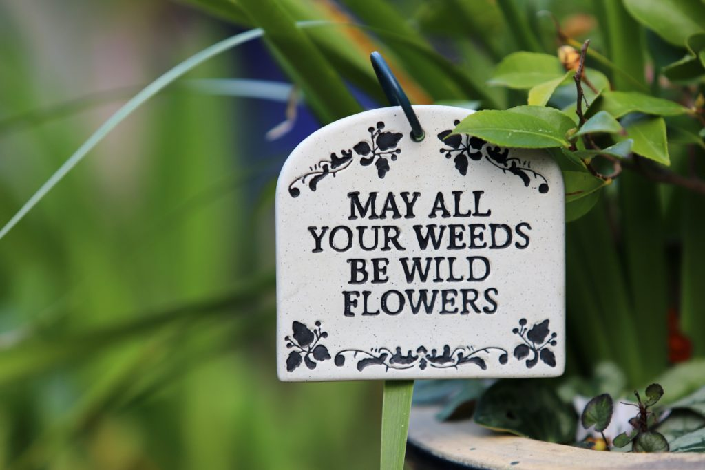 Weed and cannabis quotes